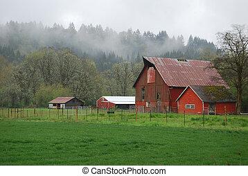 Corderos rojos y niebla