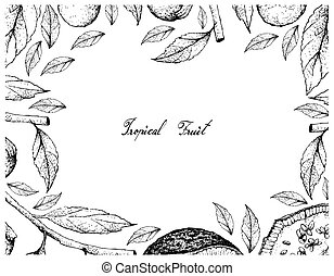 cordia, marco, mano, feroniella, caffra, fruits, dibujado, lucida