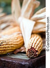 Corn V3