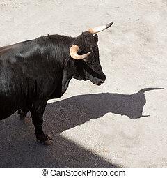 Correr de los toros en la fiesta de la calle en España