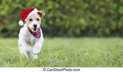 corriente, santa, perro, navidad feliz, mascota, perrito