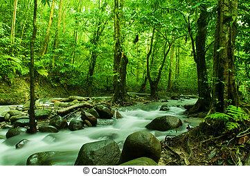 Corriente tropical fluyendo