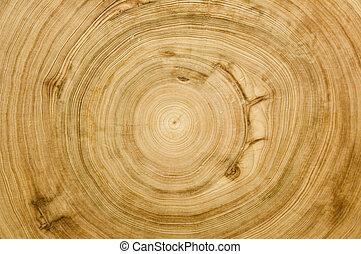 Corta la textura de madera