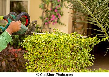 Cortando los arbustos con tijeras eléctricas