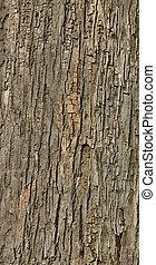 corteza, árbol, embaldosado, textura