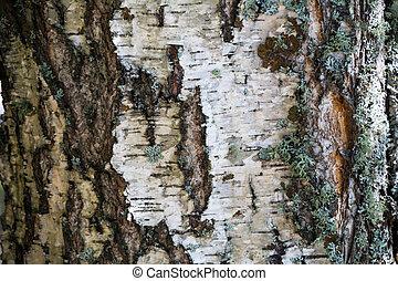 corteza blanca y fondo de musgo