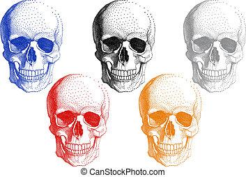 Cráneos humanos, vector fijado