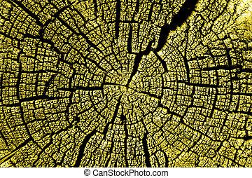 cracks., corte, anual, hermoso, árbol llama