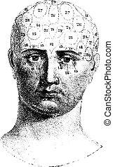 Cranial de tipo dado por Spurzheim, vista frontal, grabado vintage.