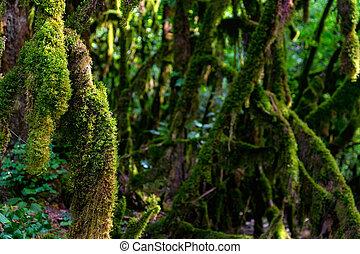 crecer, cicatrizarse, árbol, musgo, branches.