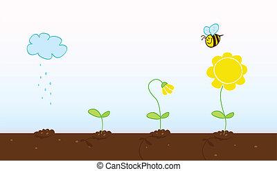 crecer, etapas, flor