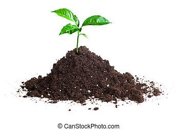 crecido, brote, aislar, verde, tierra