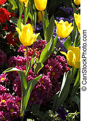 crecido, exquisite., arriba, parques, tulipanes