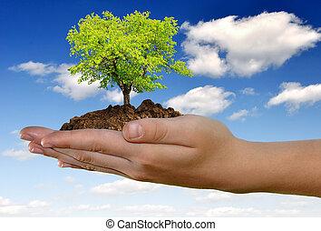 Creciendo árbol en mano