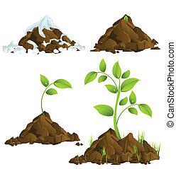Creciendo plantas