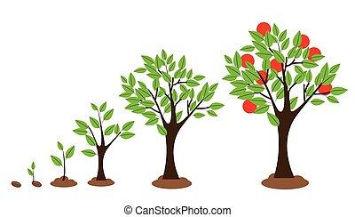 crecimiento, árbol