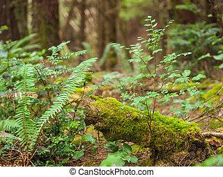 Crecimiento grueso en un bosque costero