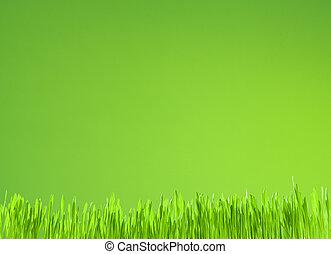 Crecimiento limpio de hierba fresca en verde fondo