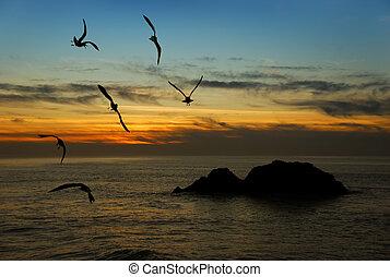 crepúsculo, california