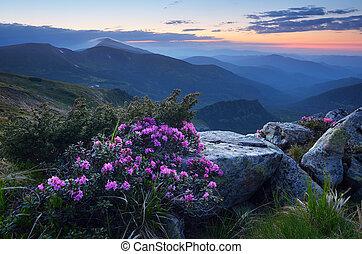 Crepúsculo en las montañas en verano
