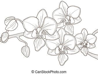 Cretino de orquídea