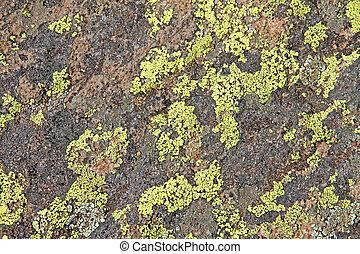 Crustose lichen en las rocas de Arizona