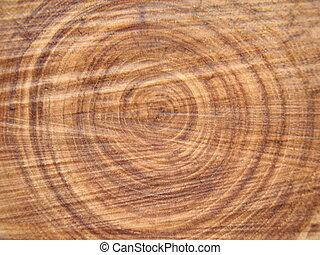 Cruza la sección de un árbol