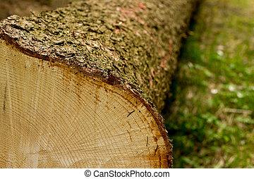 Cruza la sección del árbol