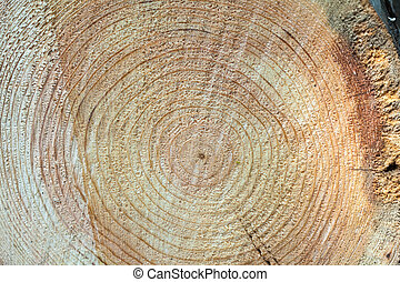 Cruza la sección del tronco del árbol