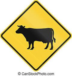 Cruzando ganado