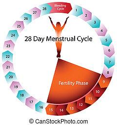 Cuadro menstrual de fertilidad
