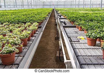cuarto de niños de la planta, invernadero