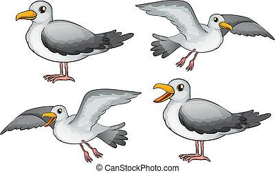 cuatro, aves