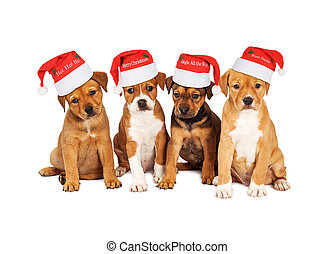 Cuatro cachorros de Navidad juntos