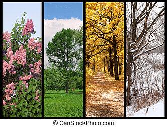 Cuatro estaciones primavera, verano, otoño, árboles de invierno collage con frontera