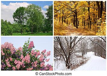 Cuatro estaciones primavera, verano, otoño, árboles de invierno collage con fronteras blancas