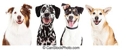 cuatro, primeros planos, perro, feliz