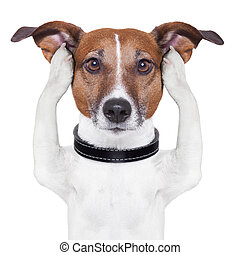 Cubriendo orejas, perro