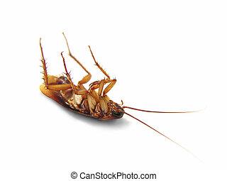 Cucaracha muerta aislada