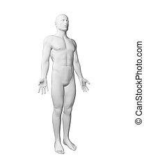 Cuerpo blanco
