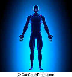 Cuerpo completo, vista frontal, conce azul