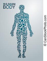 cuerpo, concepto, humano