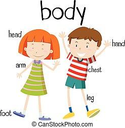cuerpo despide, humano, diagrama