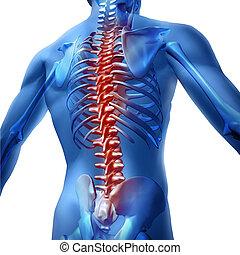 cuerpo, dolor, espalda, humano