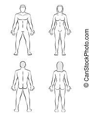 cuerpo, mujer, contorno, ilustración, blanco, hombre