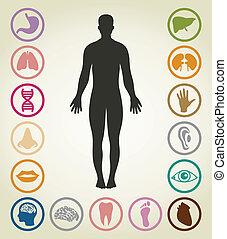 Cuerpos de la persona