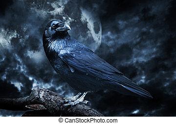 Cuervo negro a la luz de la luna posado en el árbol. Aterrador, espeluznante, gótico.