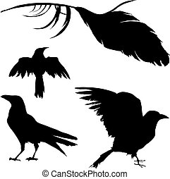 cuervo, pluma, cuervo, vector