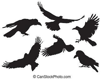 cuervo, silueta