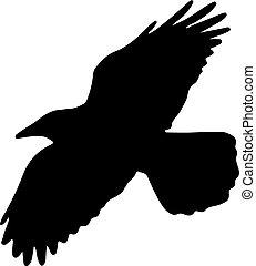 Cuervo volador